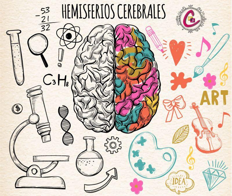 Trabaja la integración de tus hemisferios cerebrales y mejora tu ...